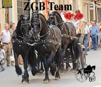 Zilco ZGB Team Driving Harness