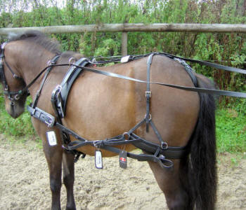 Silco SL Single Shetland Harness