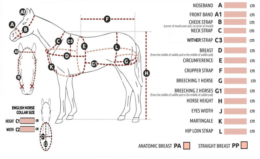 Horse Harness Measurment Diagram