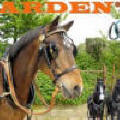 Arden Quality Leather Harness made to measure or off the shelf sizing